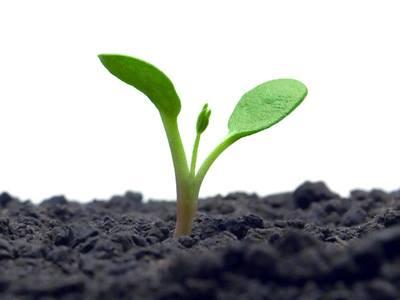 semillas y tierra