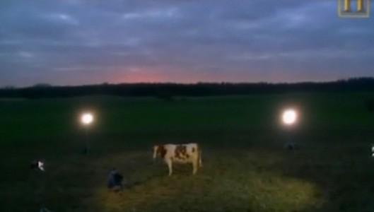 """""""Esto es una vaca. Una vaca europea. Es una vaca feliz."""" Documental """"La poderosa agricultura europea"""""""