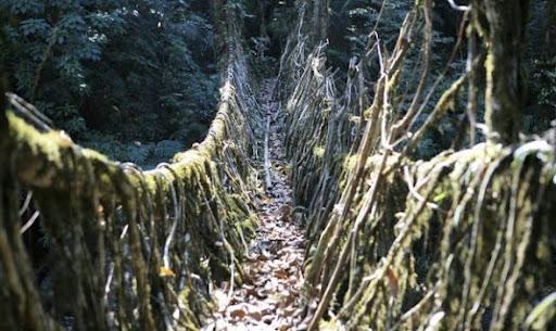 puente raíz