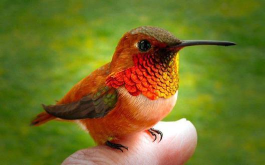 colibri3