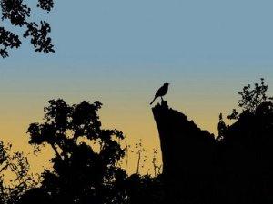 """""""...con alas rotas para volar..."""" F.Ubiergo - """"Mujeres que corren con los lobos""""  Fragmento de Capítulo 14: """"LA SELVA SUBTERRÁNEA"""""""